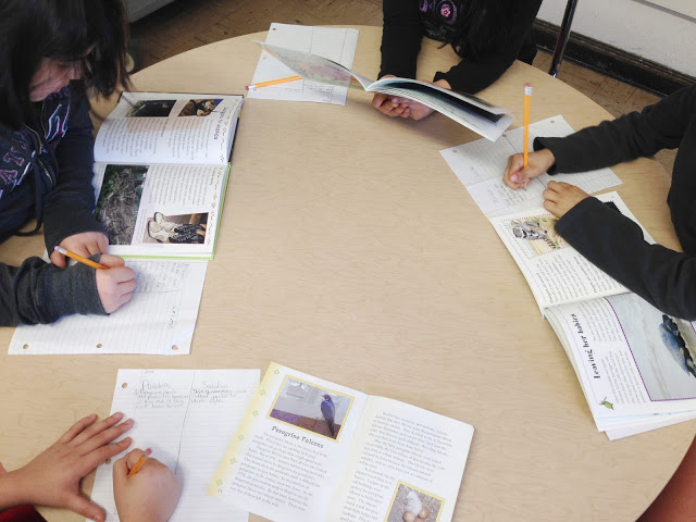 Looking for fun activities for teaching nonfiction text structure? My students loved making Prezis with their own short passages and completing these task cards and sort. Easy way to integrate technology into the reading block.